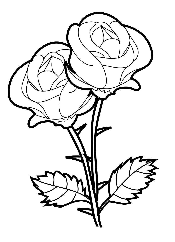 Gambar Mewarnai Bunga Mawar Terbaru Gambar Mewarnai