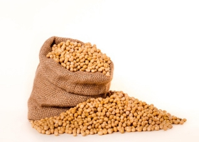 Picture of soybeans.