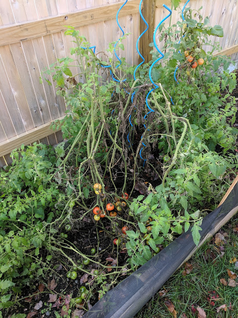 My Harvest Life - Episode 17: Putting the Tomato Plants out of their Misery