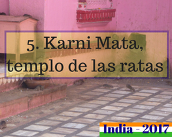 Viaje al norte de India - Karni mata templo de ratas