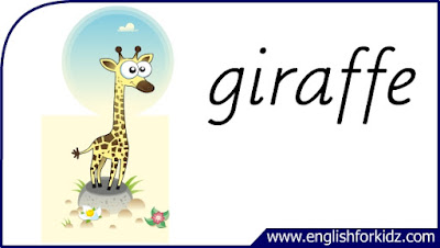 giraffe flashcard