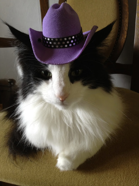 Cowboy cat by Infomastern from flickr (CC-SA)