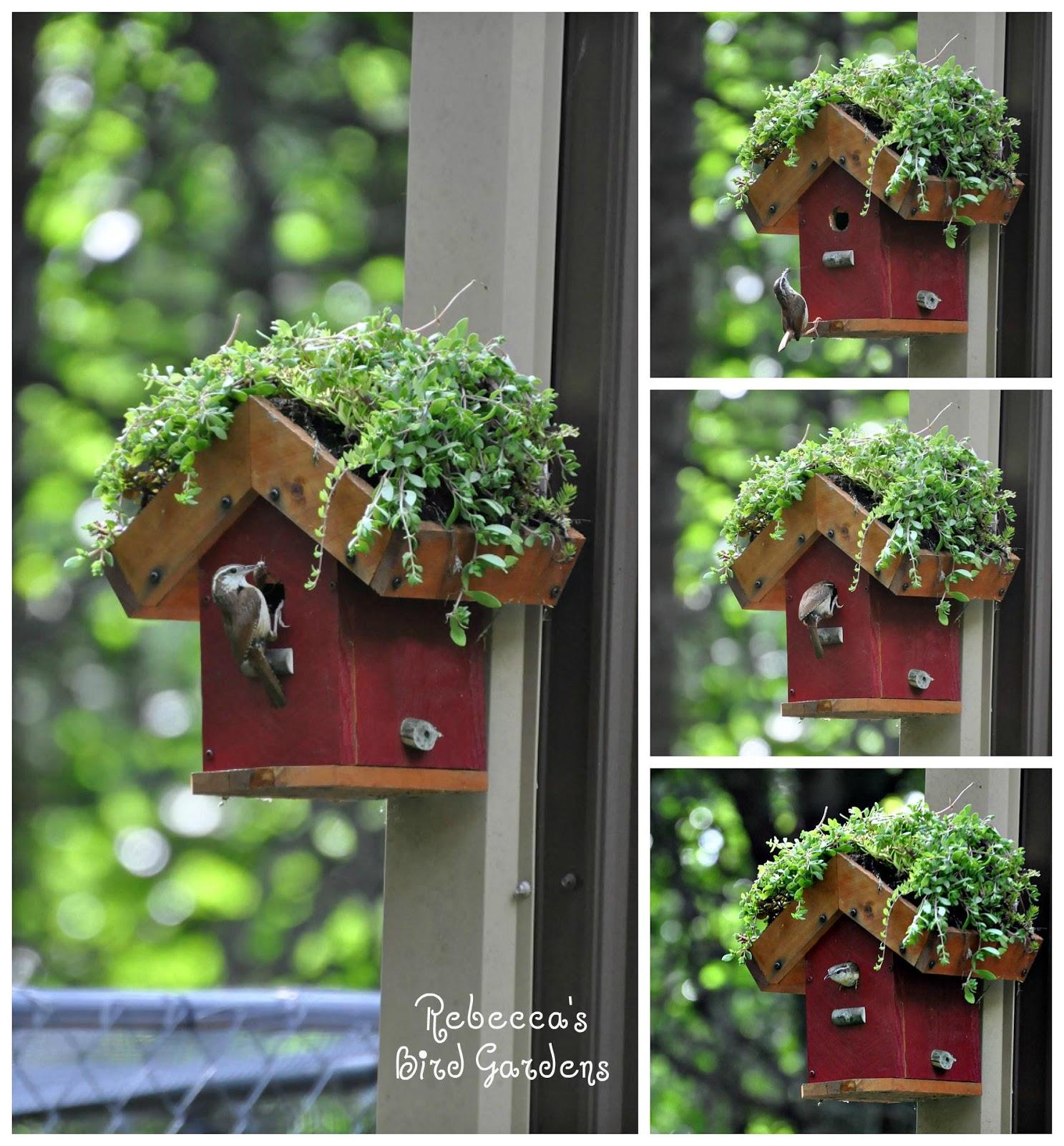Rebecca S Bird Gardens Blog Diy Living Roof Birdhouse