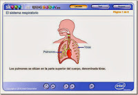 http://www.skoool.es/content/los/biology/respiratory_system/index.html