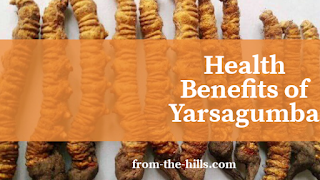 Health Benefits of Yarsagumba