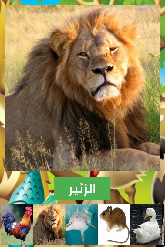 تطبيق أسماء و أصوات الحيوانات بالصوت و الصورة بدون أنترنيت على جوجل بلاي 2