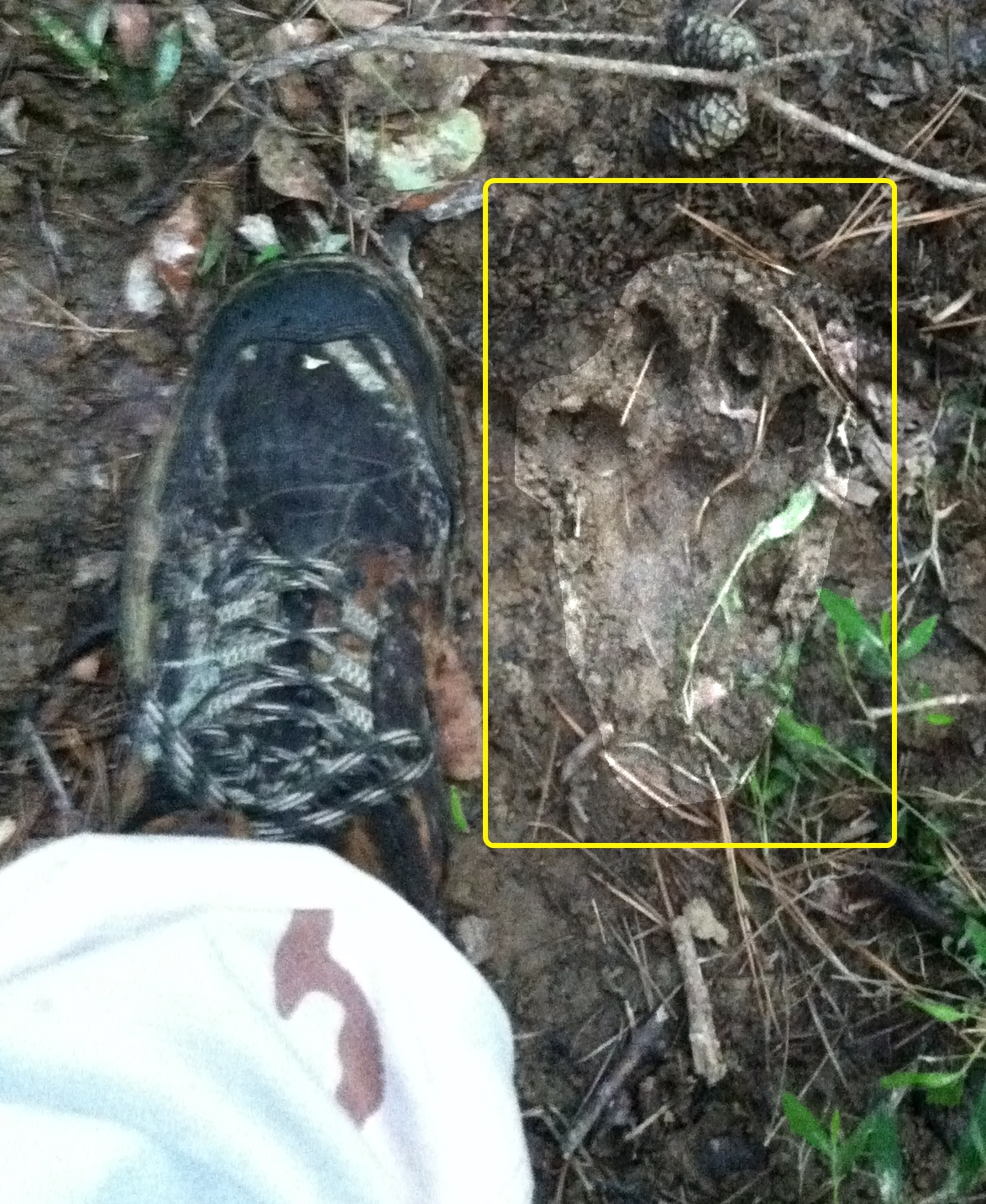 Dogman - The Monsters are Real: Dogman - Footprints