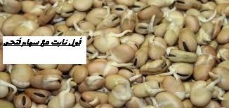 الفول النابت  بأحلى وصفه مع الارز بالشعريه (طريقة ممتازه للفول النابت هتعجبكم جدا )beans sprouting