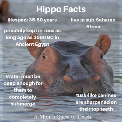 Photo of Hippo with facts