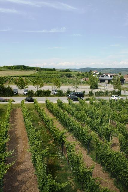 Die Weinberge im Kamptal in Niederösterreich © Copyright Monika Fuchs, TravelWorldOnline
