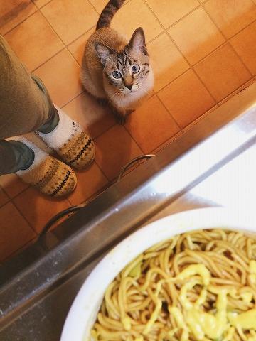 カップ焼きそばを狙うシャムトラ猫