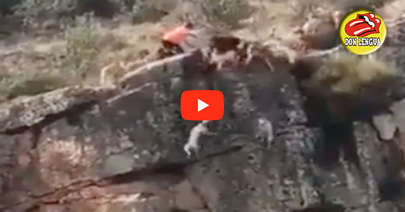 12 perros y un venado caen al precipicio por culpa de un cazador