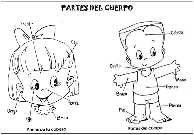 El Cuerpo Humano Para Niños Para Colorear E Imprimir Imagui