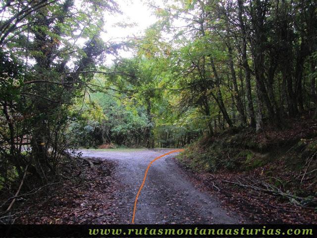 Ruta Bosque de Peloño: desvío a la derecha