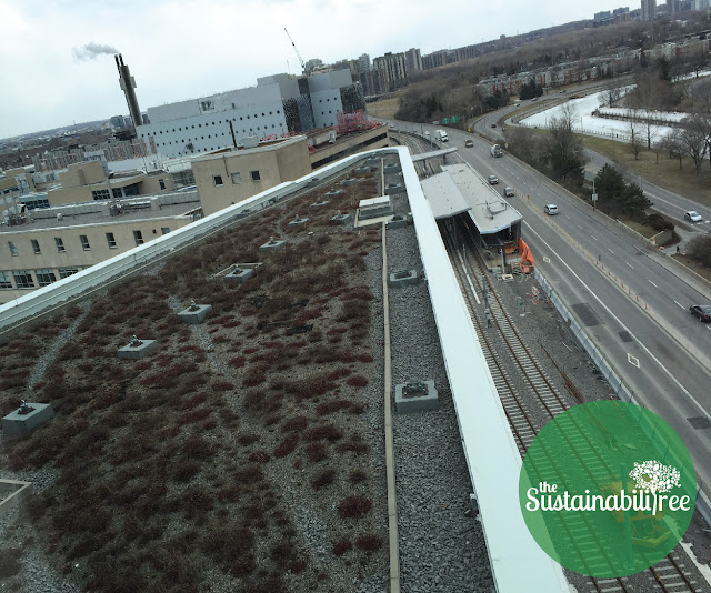Green roof on the FSS building overlooking the new LRT project