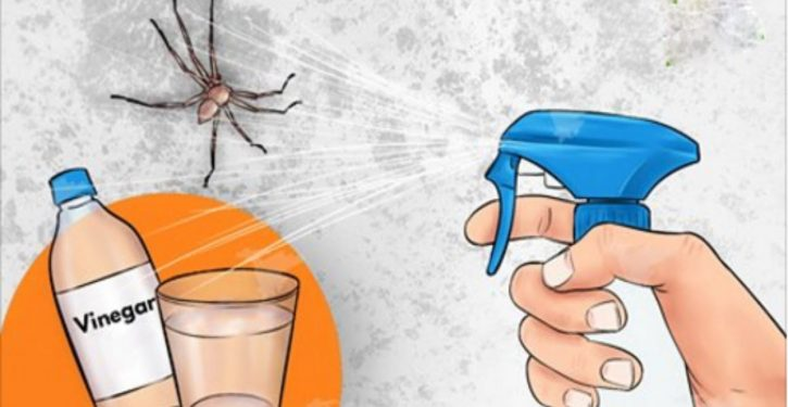 Spider In Your Kitchen, Bathroom Or Bedroom