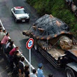 World's Largest Tortoise (529 Years Old) Found In Amazon Basin