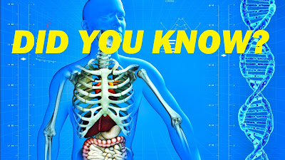 Under our skin lies many interesting facts about our body