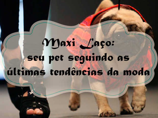 Maxi Laço: seu pet seguindo as últimas tendências da moda