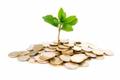 Bank SME Loan