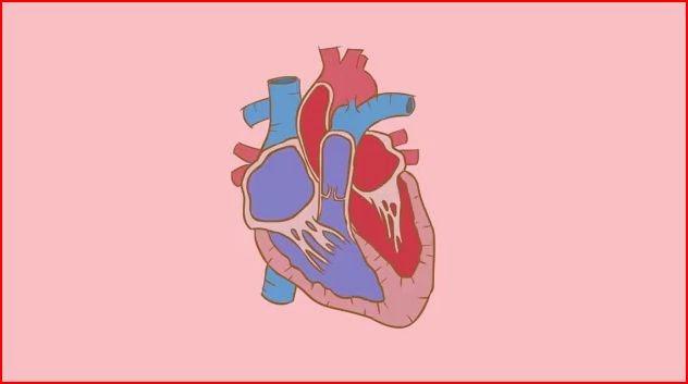 human heart animatedfilmreviews.filminspector.com