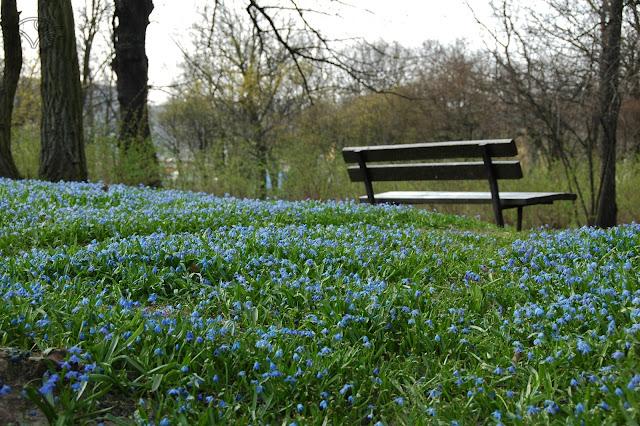 wiosna kwiatki ławka