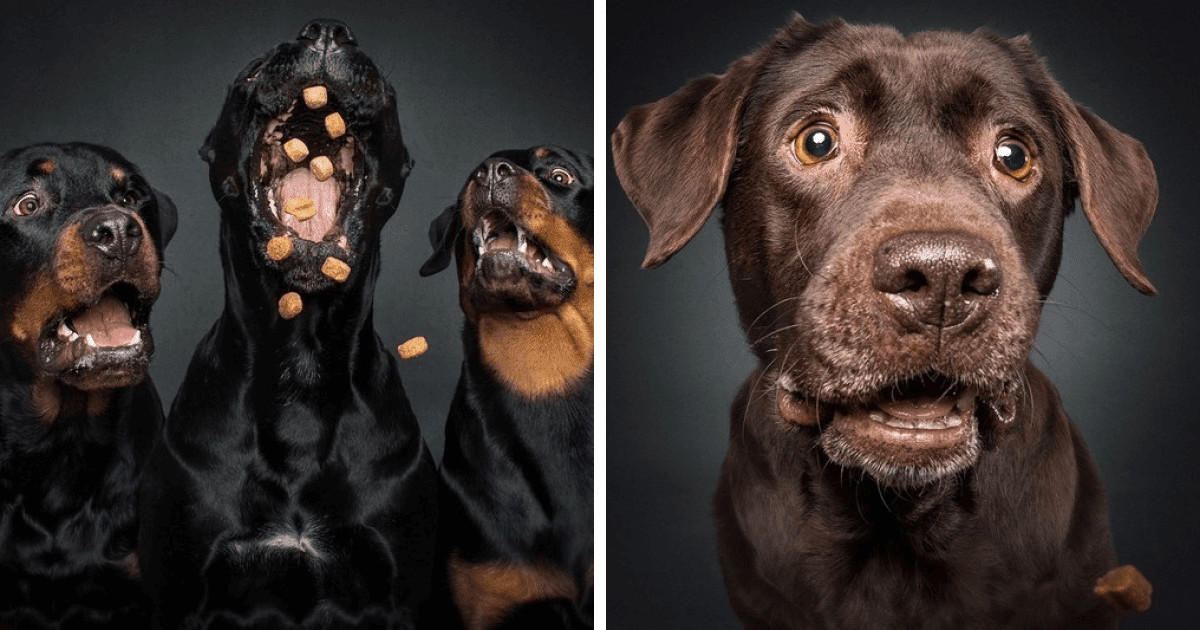 Hilarious Pictures Of Dogs Trying To Catch Treats In The Air