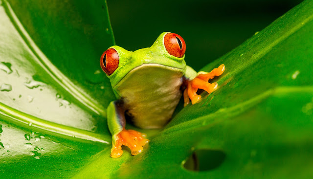 Life on the edge: How forest fragmentation is impacting on amphibian and reptile species