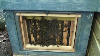 Cadre vitré pour observer les abeilles
