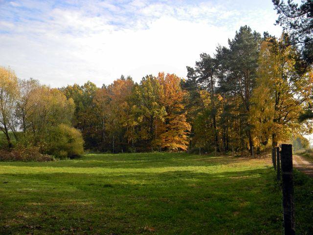 polska jesień, lasy, łąki, przyroda