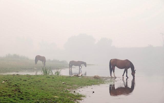 Drinkende paarden bij een meer