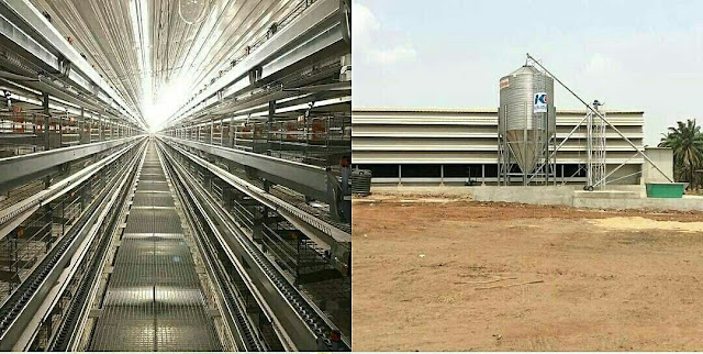 Anambra: Behold the Largest Poultry Project in South-East with 1750 New Jobs