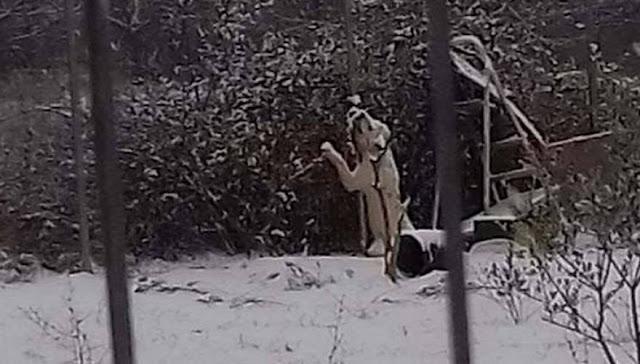 ΚΑΘΑΡΜΑ- Είχε δέσει το σκύλο του σε χωράφι και τον άφησε να πέθανε από την παγωνιά! (