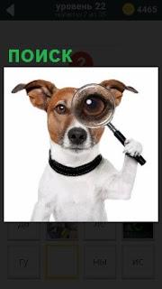 Собака в черном ошейнике и с лупой на глазах осуществляет поиск во всех направлениях
