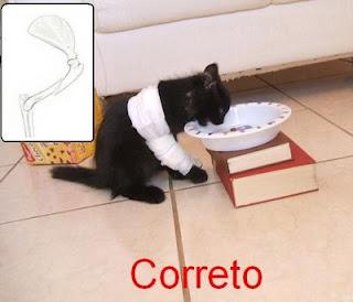 alimentador para gatos