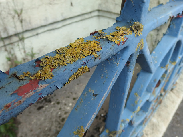 Lichen on the railings