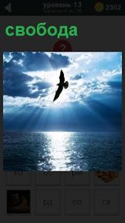 В лучах солнца над морем свободно парит чайка в лучах заходящего солнца
