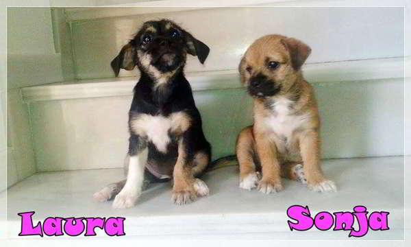 cachorras tamaño pequeño