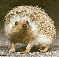 More Hedgehog Facts