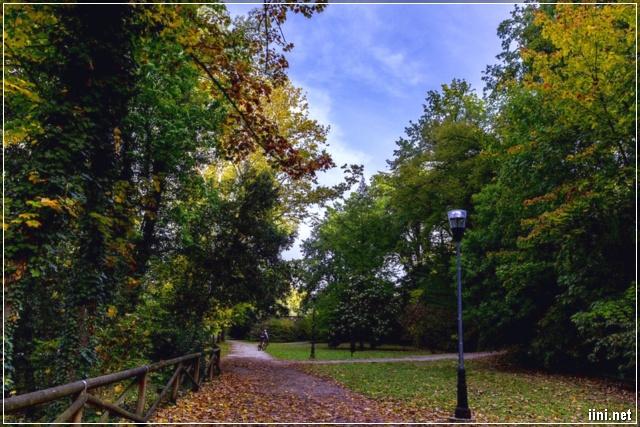 ảnh con đường vàng lá mùa thu