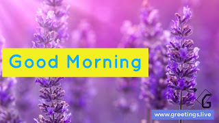 Good morning text in light purple over Rectangular yellow background located from left hand side edge middle,over all image back ground is lavender small trees, Greetings.live labels at right hand side bottom corner of image.