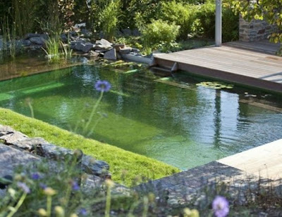 Small natural swimming pool design