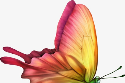 22+ Butterfly Images Photos Wallpaper Pics Gallery in HD