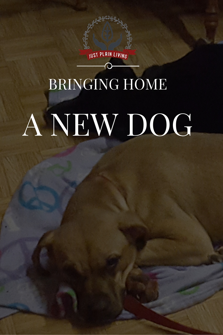 There is so much involved in bringing home a new dog - no matter the age!