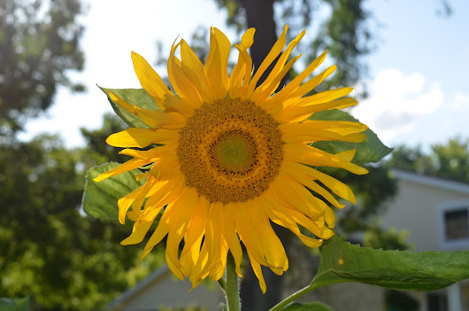 Garden Bloggers' Bloom Day - Summer 2015