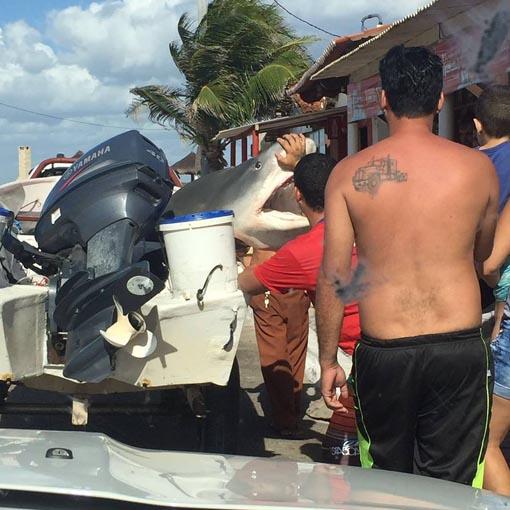 Equipe de pesca de Macau captura tubarão de quase 4 metros na praia de Camapum