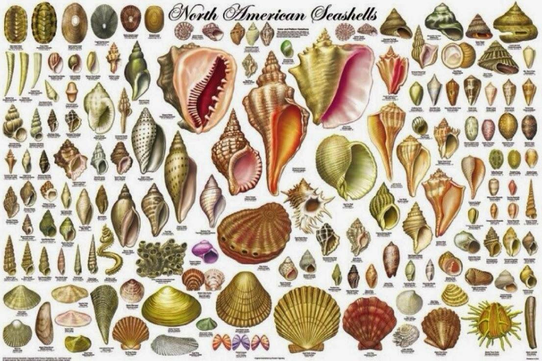 mar, conchas, tesoros, joyas, naturaleza, manualidades, mágicas