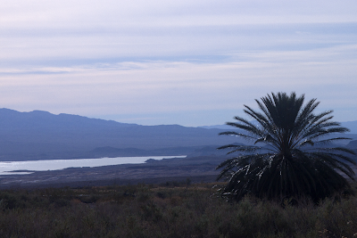 a photo of Lake Mead and a palm tree