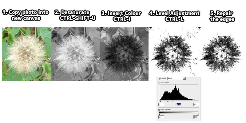 Creating Photoshop Dandelion Brush From Photo