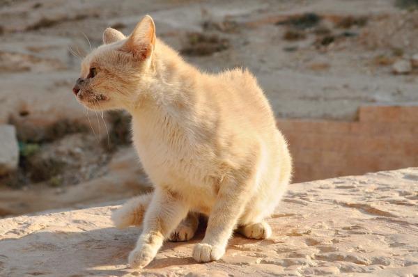 petra feral cats